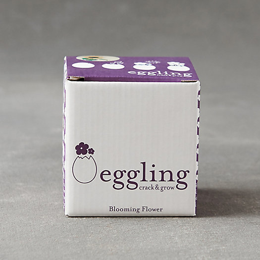 View larger image of Eggling Grow Kit