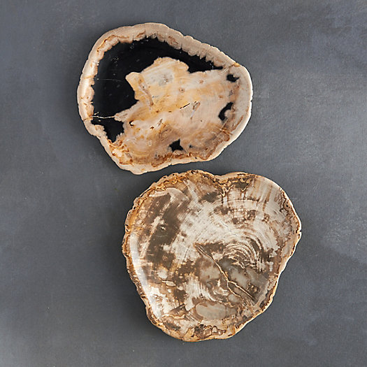 View larger image of Petrified Wood Tray