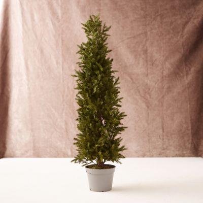 Narrow Faux Tabletop Tree