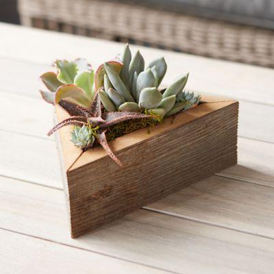 Living Succulent Triangle Planter