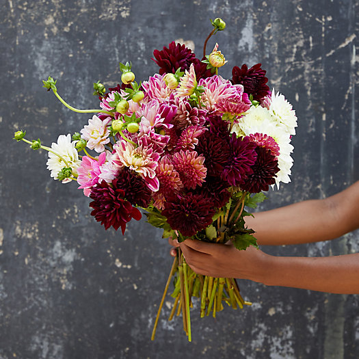 View larger image of Fresh Dahlia Bunch