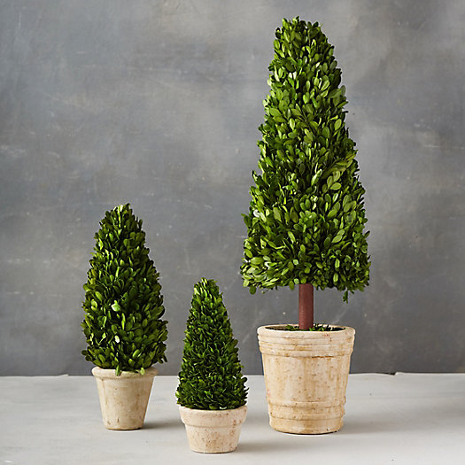 View larger image of Preserved Boxwood Cone Topiary