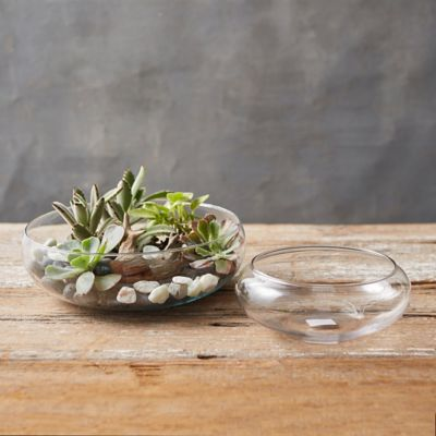 Shallow Curve Bowl Terrarium