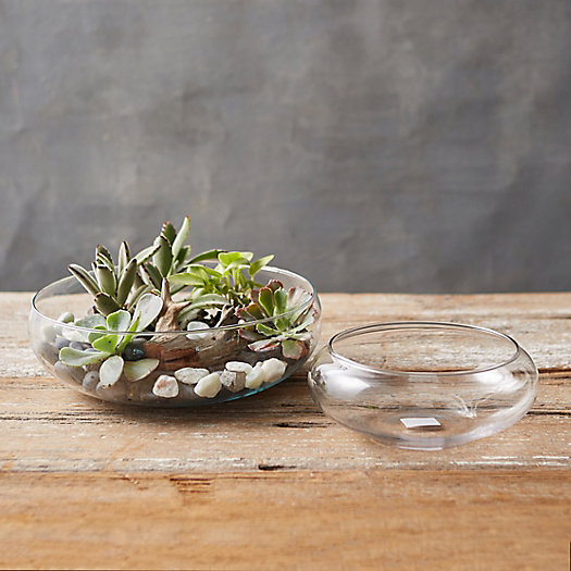View larger image of Shallow Curve Bowl Terrarium