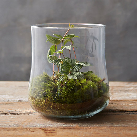 View larger image of Cinched Cylinder Terrarium