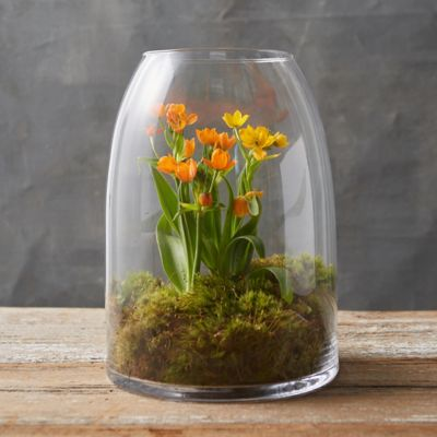 Open Dome Terrarium