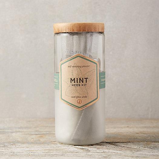 View larger image of Glass Jar Herb Grow Kit