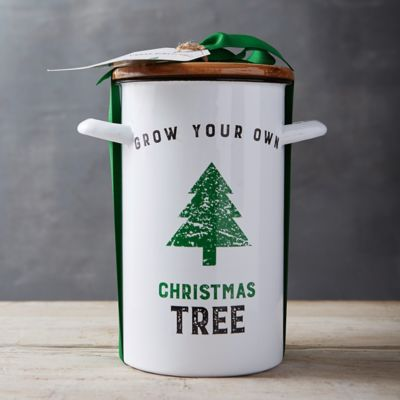 Urban Agriculture Christmas Tree Grow Kit