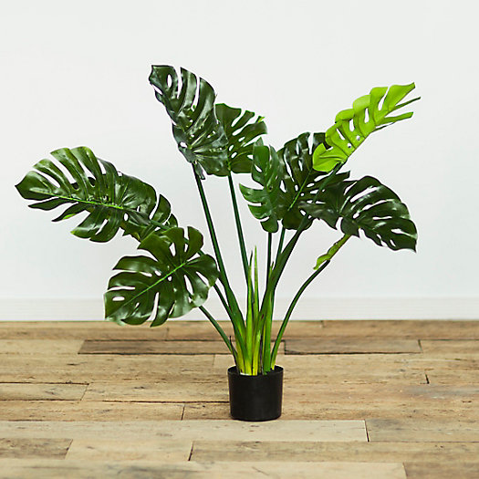 View larger image of Faux Philodendron