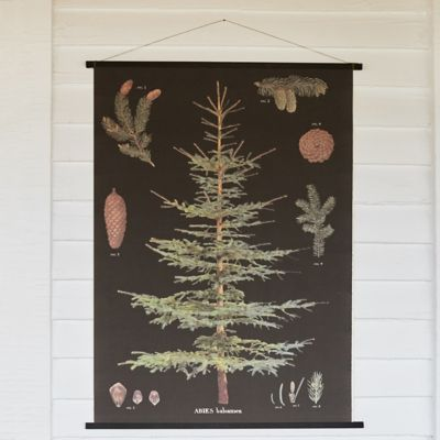Hanging Balsam Botanical Illustration