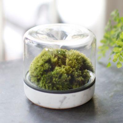 Botanica Rainforest Kit