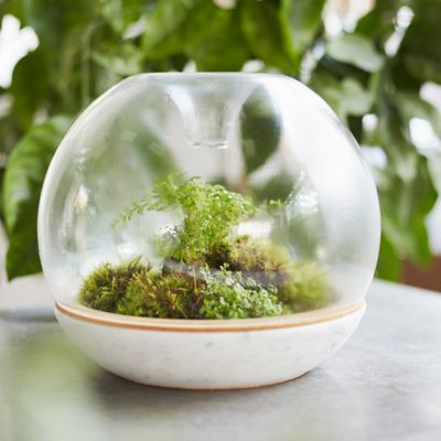 Botanica Biodome Kit