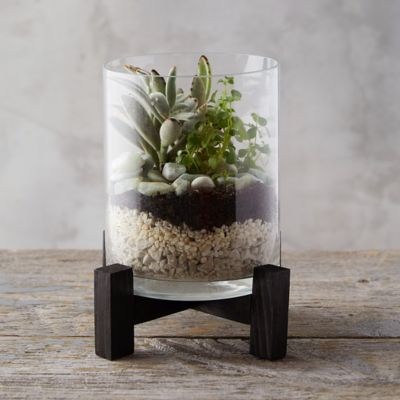 Open Terrarium with Stand