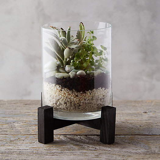 View larger image of Open Terrarium with Stand