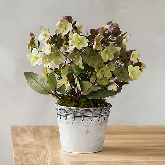 View larger image of Hellebore, Metal Weave Pot