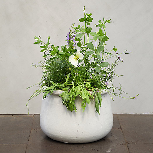 View larger image of Roll Top Planter