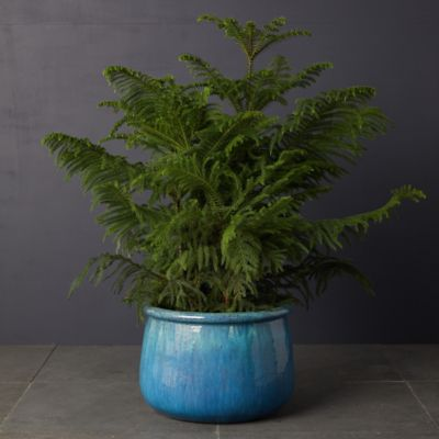 Roll Top Ceramic Planter