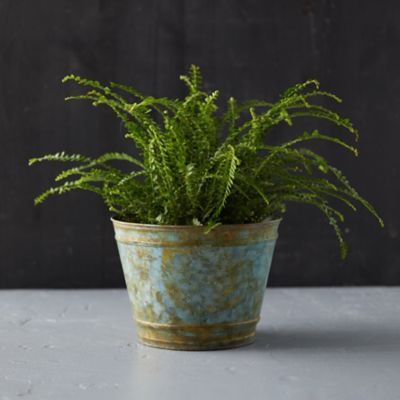Galvanized Edged Pot