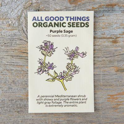 Purple Sage Seeds