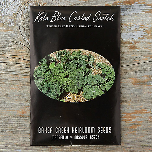 View larger image of Blue Curled Kale Seeds
