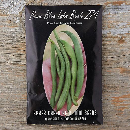 View larger image of Blue Lake Bean Seeds