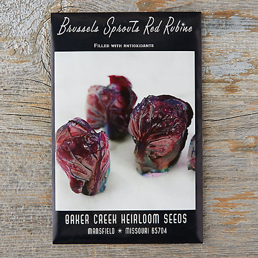 View larger image of Red Rubine Brussels Sprout Seeds
