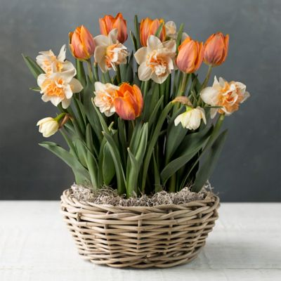 Tulip and Daffodil Mix, White Basket