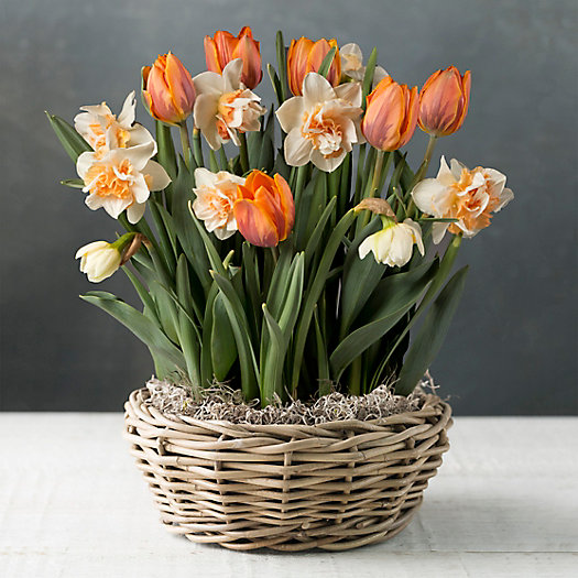 View larger image of Tulip and Daffodil Mix, White Basket