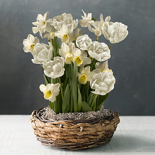 View larger image of Tulip and Daffodil Mix, Woven Basket