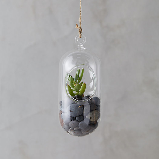 View larger image of Hanging Oval Terrarium, Small