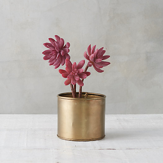 View larger image of Faux Potted Succulent