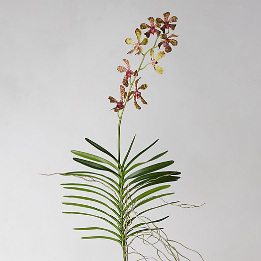 View larger image of Faux Bordeaux Orchid Stem