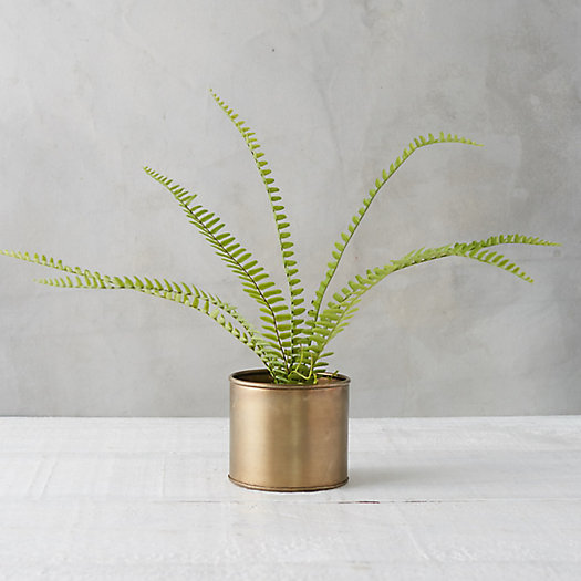 View larger image of Faux Fern
