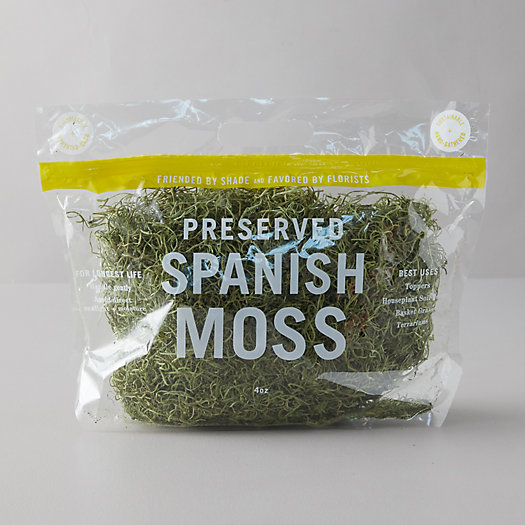 View larger image of Preserved Spanish Moss