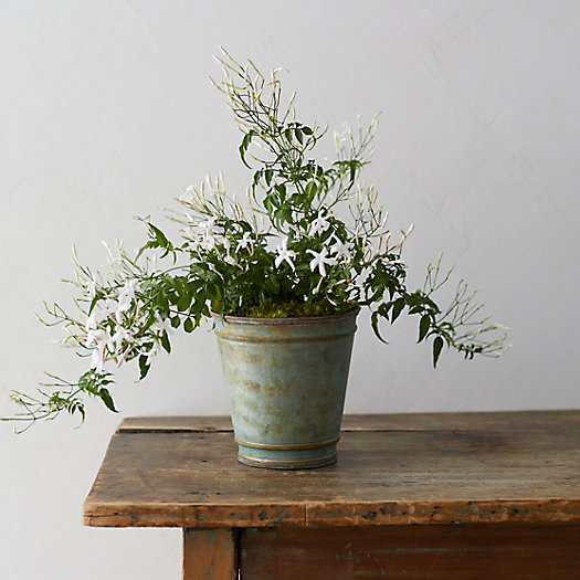 View larger image of White Jasmine, Verdigris Pot
