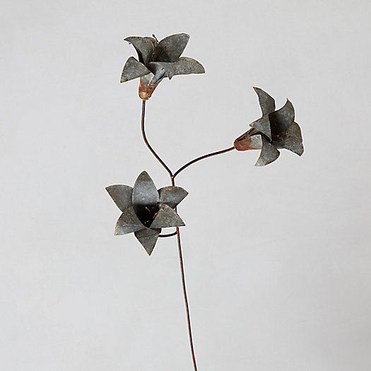 View larger image of Iron Lily Stem