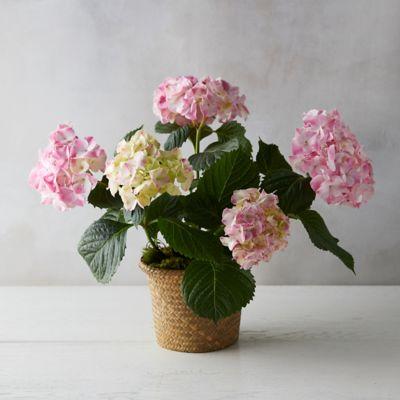 Ravel Hydrangea, Woven Grass Pot