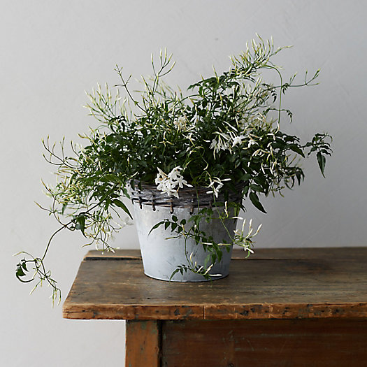 View larger image of White Jasmine, Metal Weave Pot