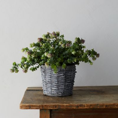 Ornamental Oregano, Rattan and Metal Pot