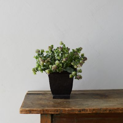 Ornamental Oregano, Square Metal Pot