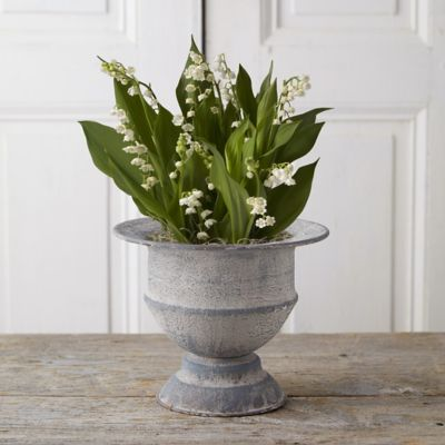 Lily of the Valley, Urn