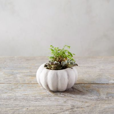 Pumpkin Pot, Mini