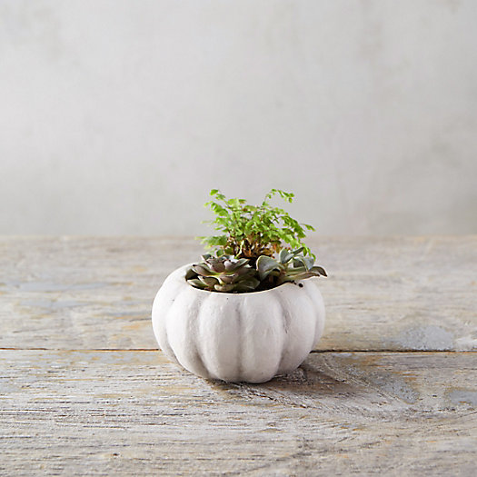 View larger image of Pumpkin Pot, Mini