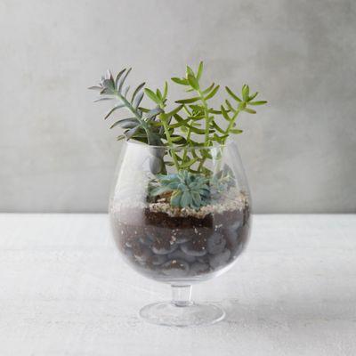 Brandy Glass Terrarium