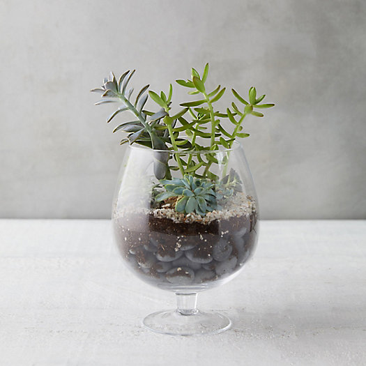 View larger image of Brandy Glass Terrarium