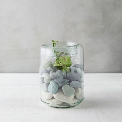 Folded Mouth Terrarium, Tall