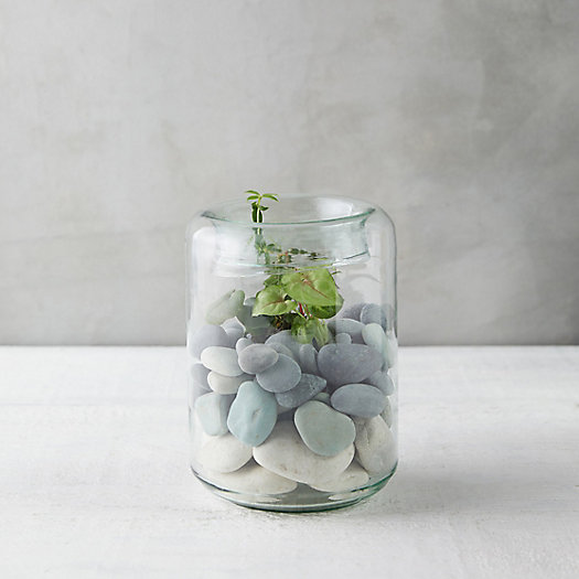 View larger image of Folded Mouth Terrarium, Tall