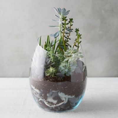 Sliced Mouth Terrarium, Tall
