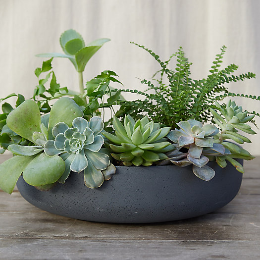 View larger image of Fiber Concrete Bowl Planter