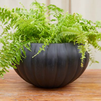 Fiber Pumpkin Bowl Planter
